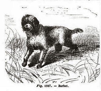 Barbet from Joigneaux (1865)